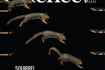 Science封面松鼠运气为什么总是好到爆